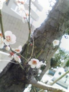 なんの花でしょう?.jpg